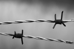 barbed-wire-1269430_1280